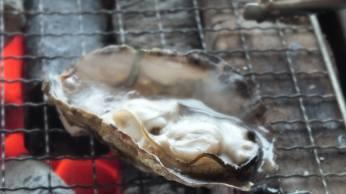 かき小屋で焼く牡蠣 2